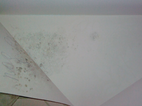 """""""Гнездо"""" плесени находится под обоями. Фото с сайта izhevsk.ru"""