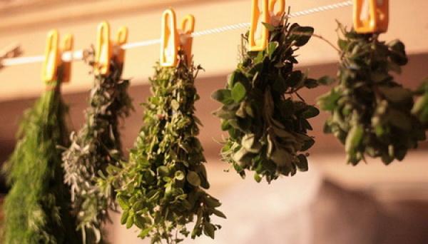 Как избавиться от пищевой моли на кухне и в целом в квартире