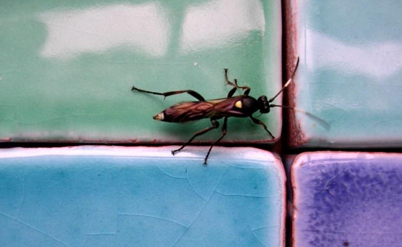 Насекомые на кафеле. Фото с сайта 1600x1200.net