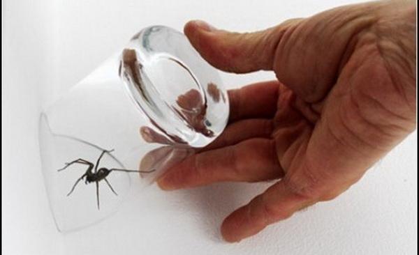 Особенности уборки и народные средства, которые помогут проводить пауков за порог вашей квартиры
