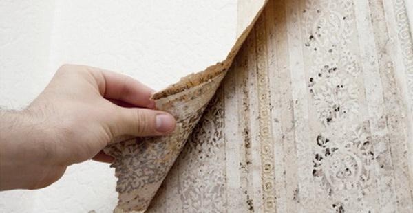 Как предотвратить сырость и справиться с повышенной влажностью воздуха в квартирах на первых и последних этажах
