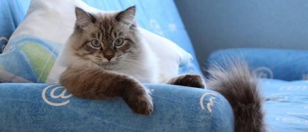 Как почистить диван от пыли и неприятных запахов в домашних условиях: советы, отзывы, рекомендации