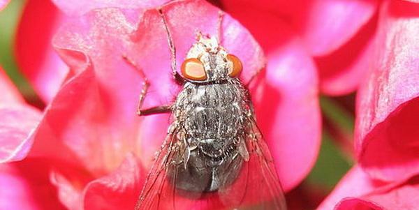Народные и специальные средства, которые убьют мух наповал
