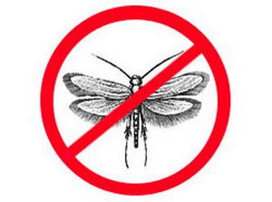 Какие средства (отпугиватели, фумигаторы, аэрозоли или ловушки) лучше справляются с молью? Какие народные методы самые эффективные?