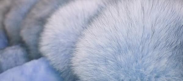 Как в домашних условиях почистить белый мех норки